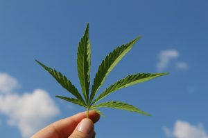 Cannabis Bouse 2019