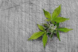 Il n'y a pas de fumée sans feu : retour sur le cannabis à la Bourse